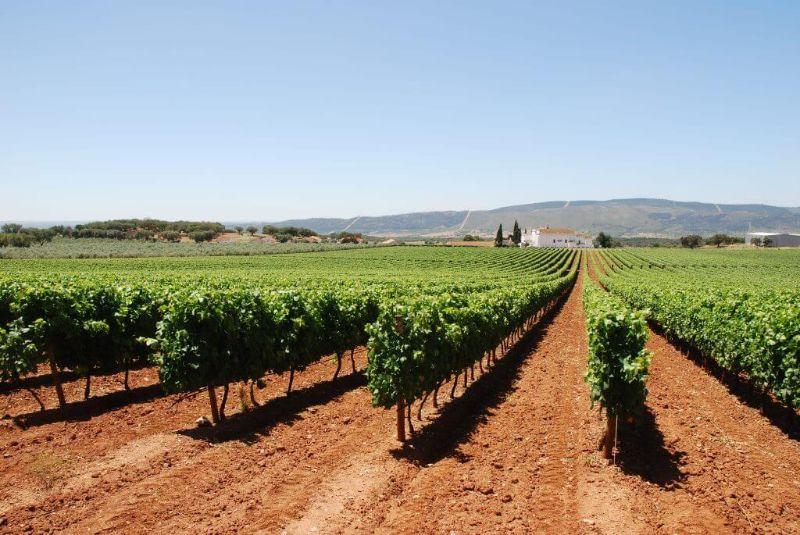 Vinho Português: As 13 Regiões Vinícolas de Portugal