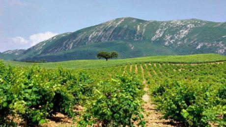 Vinho Português - As Regiões Vinícolas de Portugal